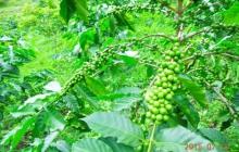 タイ山岳部に息づく有機農業を訪ねて