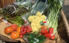 就農のきっかけと、今年の秋冬野菜