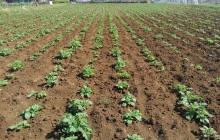 就農してから1か月 ハラハラ、ドキドキの毎日