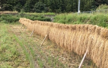お米の脱穀