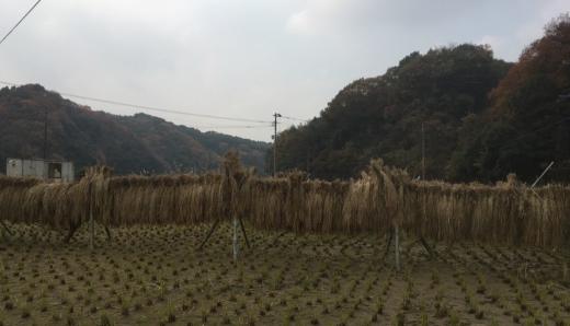 yachigo17-1
