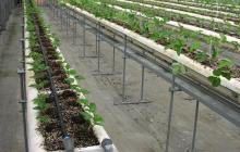 北の大地にて、イチゴ栽培再スタート