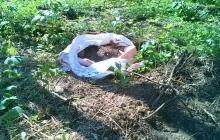 生きた土でイチゴ作り