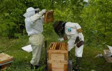 養蜂すること