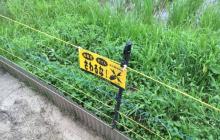 雨の福岡と鴨と
