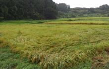 有機農業2年目を迎える今