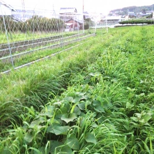 touhiguchi16-2