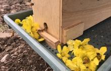 蜜蜂のこと