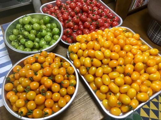 02_ミニトマトの袋詰め準備