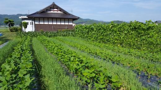 ooshima6-1