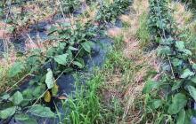 平成30年7月の豪雨による畑の被害