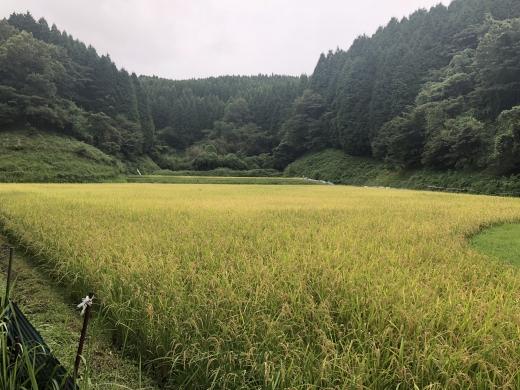 report_kyushu_180822_4