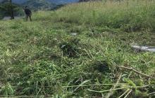 秋雨前線異状あり、お米は草に大惨敗!