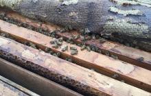 蜜蜂との暮らし