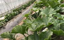 植物の成長について③
