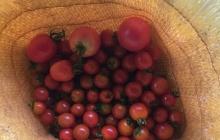 自分が本当にやりたいことをやるために決断するか、現状維持か。はせがわ農園、露地野菜栽培とメロン栽培の今後。