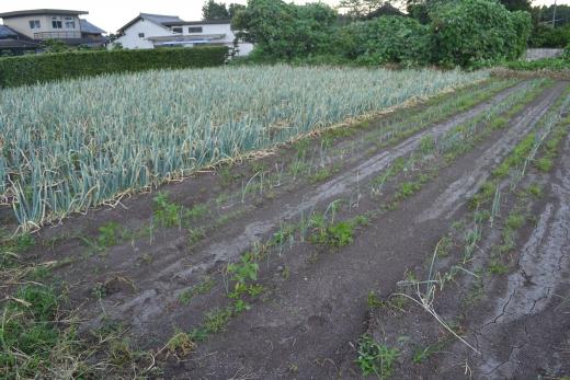 kawasaki12-6森3