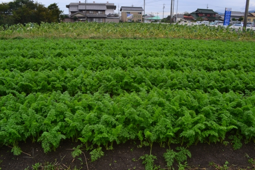 kawasaki14-9306西-1