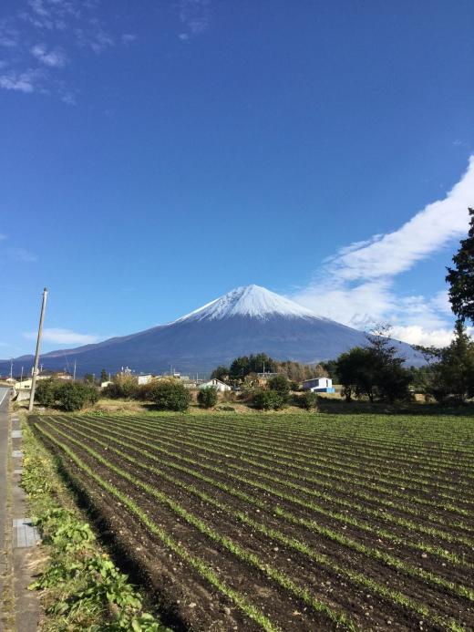 hasegawa18-1