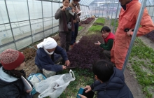 師匠の畑で勉強会(SHARE THE LOVE for JAPANのメンバー)& 営農相談(株式会社「坂の途中」のスタッフの方からの栽培計画のアドバイス)