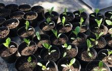自分にとって身近な農業資材とは? 愛媛県『中島』で学んだ循環型の有機農法。