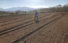 土づくりにおけるエン麦の働き