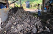 里芋収穫 ― 自然栽培と慣行栽培の比較 ―