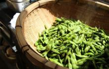 秋の枝豆最盛期