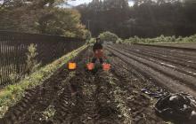 サツマイモ収穫企画から考えた今後の目標 ―収穫だけで終わらない体験へー