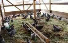 """東京から淡路島へ。""""島から始まり島で終わる""""養鶏を通じた新たな地域循環と有畜複合農業の可能性"""