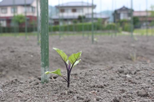 kawaguchi4-1