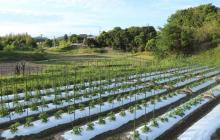 まさかの梅雨入り…。露地栽培の圃場作りと、作付け品目の考え方。