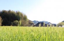 大麦収穫と1年目の営農ビジョン