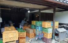 農園の個性を確立する!無農薬玉ねぎのマーケティング考察