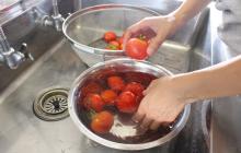 トマトの収穫体験とソース作り